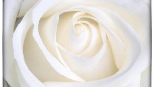 Tijd baart rozen